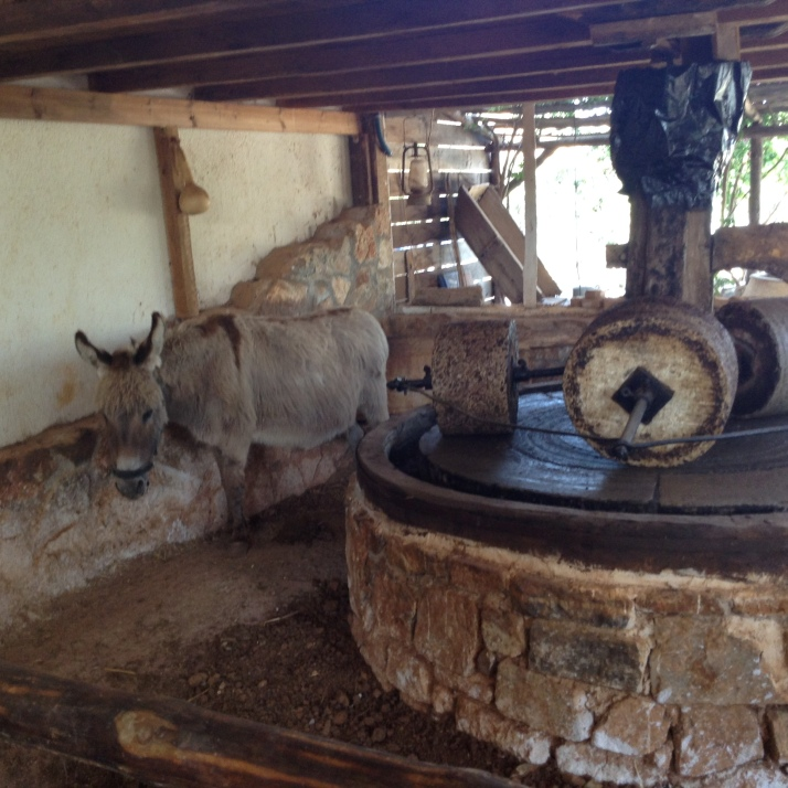 Donkey that would have ground the olives in the past
